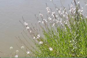 Escribir el río Guadiana